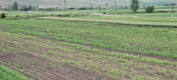 Dezastrul desăvârşit al agriculturii româneşti în general, al celei maramureşene în special