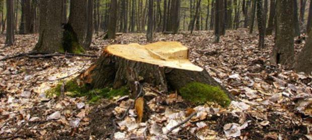 Ne trebuie 1.000 de ani să împădurim România