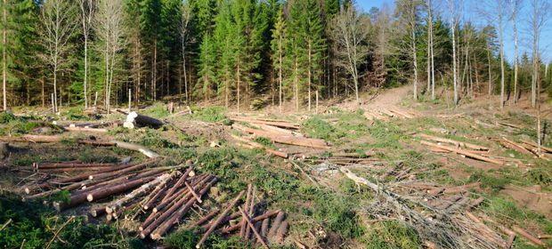 Pădurile României, lăsate pradă hoților de lemn