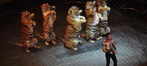 Niciun circ din România nu va mai folosi animale sălbatice în spectacole. Care sunt vietăţile care vor apărea în reprezentaţii