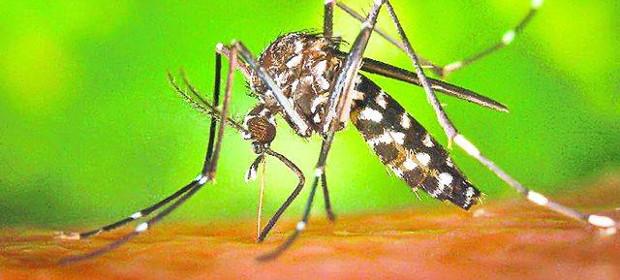 Masuri de prevenire a bolilor transmise de vectori